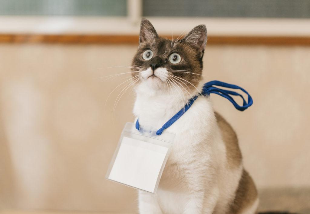 セミナーを受講するネコ